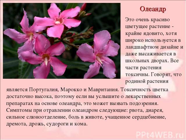 Олеандр Это очень красиво цветущее растение - крайне ядовито, хотя широко используется в ландшафтном дизайне и даже высаживается в школьных дворах. Все части растения токсичны. Говорят, что родиной растения является Португалия, Марокко и Мавритания.…