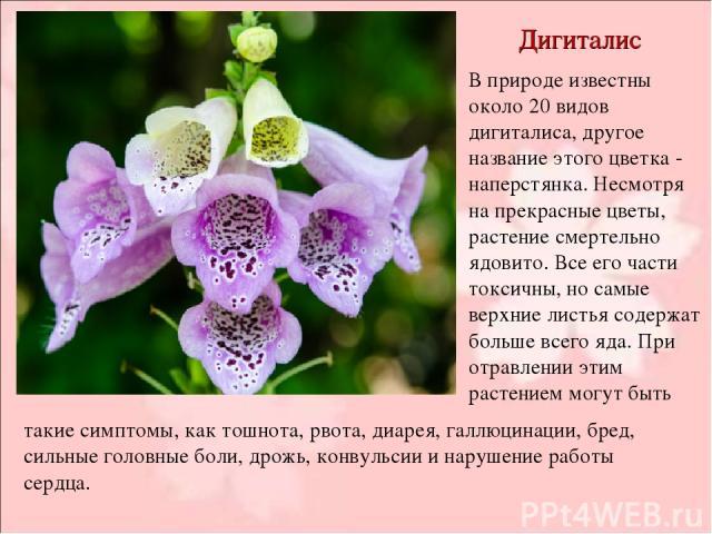 Дигиталис В природе известны около 20 видов дигиталиса, другое название этого цветка - наперстянка. Несмотря на прекрасные цветы, растение смертельно ядовито. Все его части токсичны, но самые верхние листья содержат больше всего яда. При отравлении …