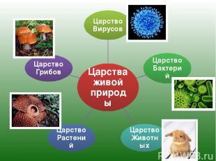 Царства живой природы Царство Вирусов Царство Бактерий Царство Животных Царство