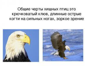 Общие черты хищных птиц это крючковатый клюв, длинные острые когти на сильных но