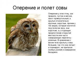 Оперение и полет совы Оперение у этих птиц, как правило, густое и мягкое, хвост