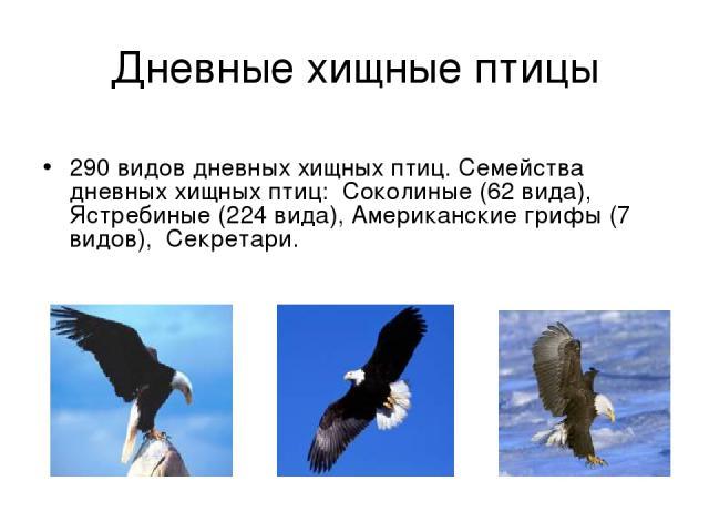 Дневные хищные птицы 290 видов дневных хищных птиц. Семейства дневных хищных птиц: Соколиные (62 вида), Ястребиные (224 вида), Американские грифы (7 видов), Секретари.