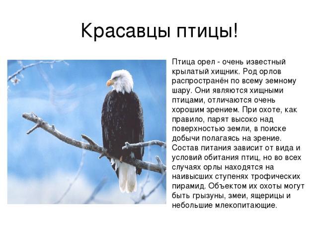 Красавцы птицы! Птица орел - очень известный крылатый хищник. Род орлов распространён по всему земному шару. Они являются хищными птицами, отличаются очень хорошим зрением. При охоте, как правило, парят высоко над поверхностью земли, в поиске добычи…