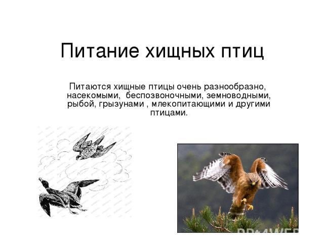 Питание хищных птиц Питаются хищные птицы очень разнообразно, насекомыми, беспозвоночными, земноводными, рыбой, грызунами , млекопитающими и другими птицами.