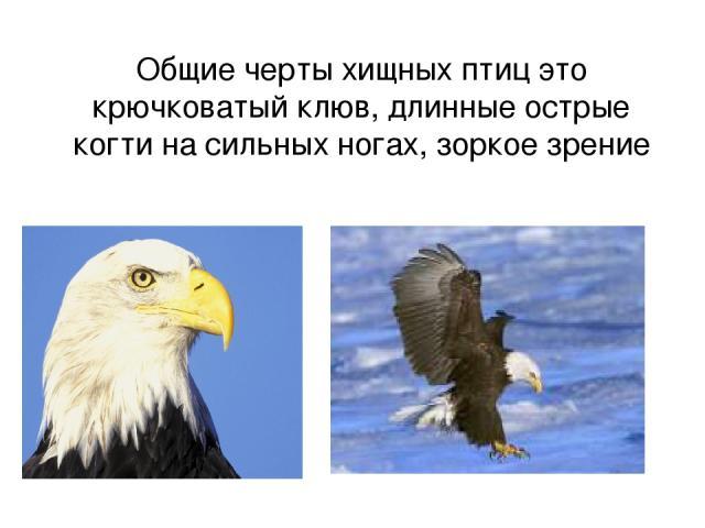 Общие черты хищных птиц это крючковатый клюв, длинные острые когти на сильных ногах, зоркое зрение