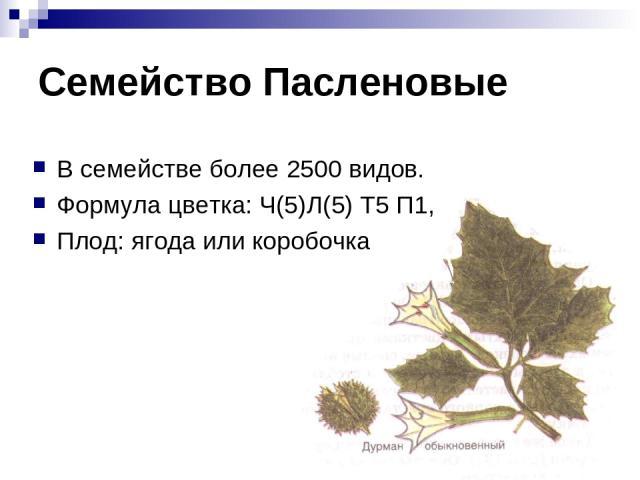 Семейство Пасленовые В семействе более 2500 видов. Формула цветка: Ч(5)Л(5) Т5 П1, Плод: ягода или коробочка