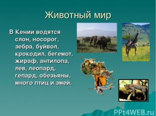 Животный мир В Кении водятся слон, носорог, зебра, буйвол, крокодил, бегемот, жи