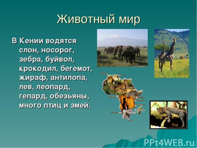 Животный мир В Кении водятся слон, носорог, зебра, буйвол, крокодил, бегемот, жираф, антилопа, лев, леопард, гепард, обезьяны, много птиц и змей.