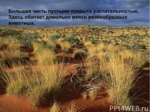 Большая часть пустыни покрыта растительностью. Здесь обитает довольно много разн