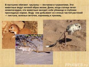В пустынях обитают грызуны — песчанки и тушканчики. Эти животные ведут ночной об