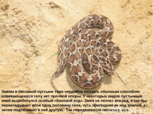 Змеям в песчаной пустыне тоже неудобно ползать обычным способом: извивающемуся т