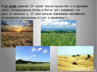 ж В степях жаркое. Относительно сухое лето и суровая зима, плодородные почвы и б