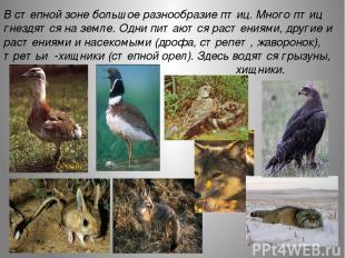 В степной зоне большое разнообразие птиц. Много птиц гнездятся на земле. Одни пи