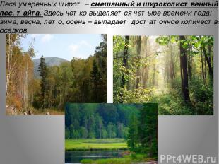 Леса умеренных широт – смешанный и широколиственный лес, тайга. Здесь четко выде