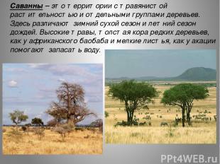 Саванны – это территории с травянистой растительностью и отдельными группами дер