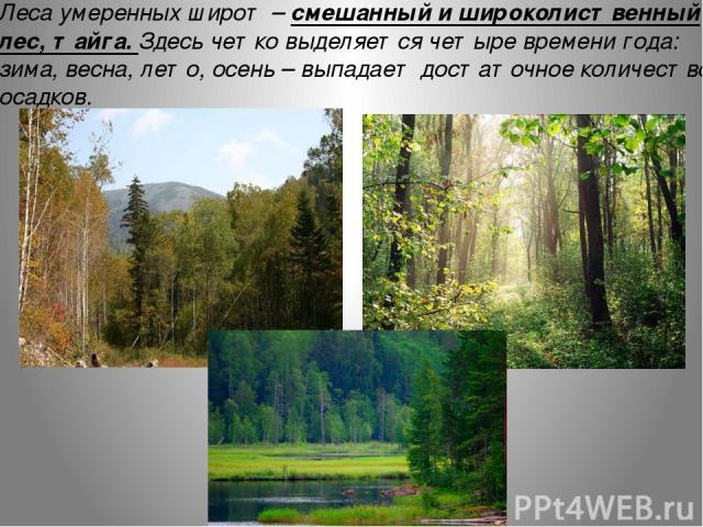 Леса умеренных широт – смешанный и широколиственный лес, тайга. Здесь четко выделяется четыре времени года: зима, весна, лето, осень – выпадает достаточное количество осадков.
