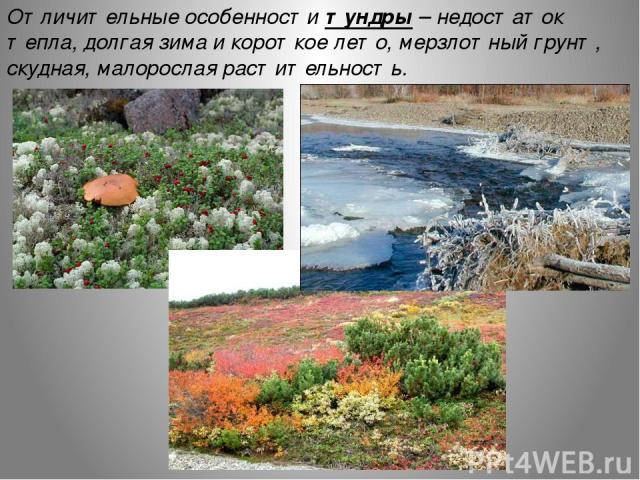 Отличительные особенности тундры – недостаток тепла, долгая зима и короткое лето, мерзлотный грунт, скудная, малорослая растительность.