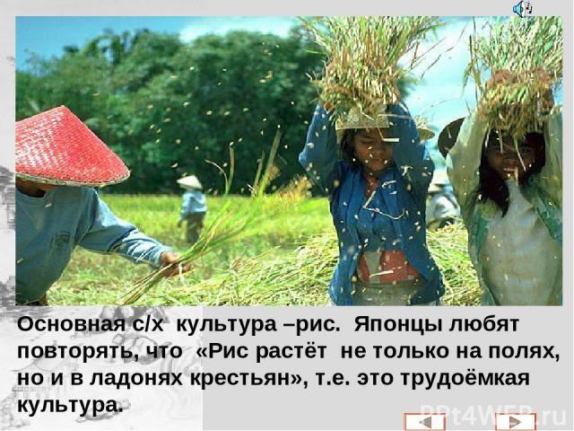 Основная с/х культура –рис. Японцы любят повторять, что «Рис растёт не только на полях, но и в ладонях крестьян», т.е. это трудоёмкая культура.