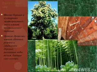 Многие деревья и кустарники экваториальных лесов имеют промышленное значение. Це