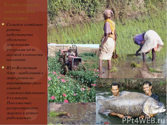 Хозяйственная деятельность населения Сельское хозяйство региона недостаточно обеспечено земельными ресурсами из-за высокой плотности населения. Юго-Восточная Азия - наибольший в мире регион по выращиванию риса - главной сельскохозяйственной культуры…