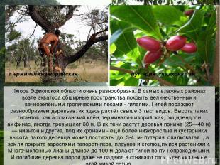 Флора Эфиопской области очень разнообразна. В самых влажных районах возле эквато
