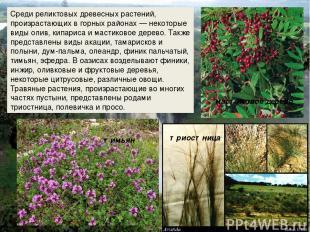 Среди реликтовых древесных растений, произрастающих в горных районах — некоторые