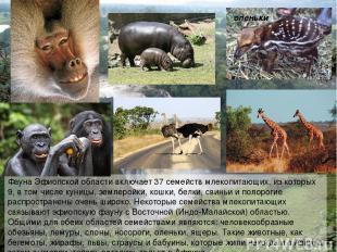 Фауна Эфиопской области включает 37 семейств млекопитающих, из которых 9, в том