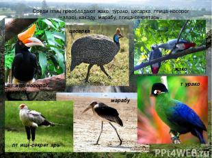 Среди птиц преобладают жако, турако, цесарка, птица-носорог (калао), какаду, мар