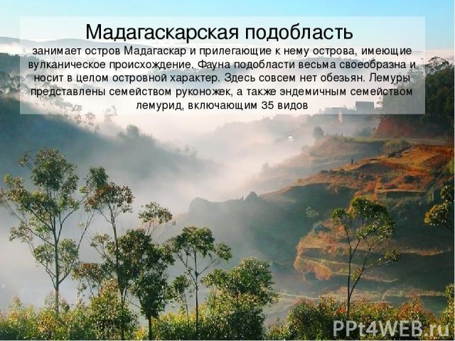 Мадагаскарская подобласть занимает остров Мадагаскар и прилегающие к нему острова, имеющие вулканическое происхождение. Фауна подобласти весьма своеобразна и носит в целом островной характер. Здесь совсем нет обезьян. Лемуры представлены семейством …