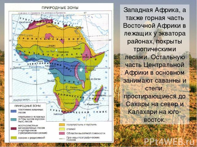 Западная Африка, а также горная часть Восточной Африки в лежащих у экватора районах, покрыты тропическими лесами. Остальную часть Центральной Африки в основном занимают саванны и степи, простирающиеся до Сахары на север и Калахари на юго-восток.
