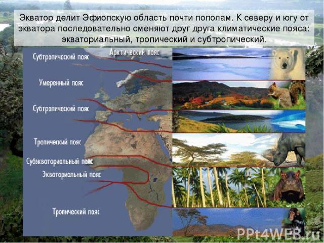 Экватор делит Эфиопскую область почти пополам. К северу и югу от экватора последовательно сменяют друг друга климатические пояса: экваториальный, тропический и субтропический.