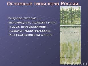 Основные типы почв России. Тундрово-глеевые — маломощные, содержат мало гумуса,