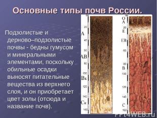 Основные типы почв России. Подзолистые и дерново–подзолистые почвы - бедны гумус