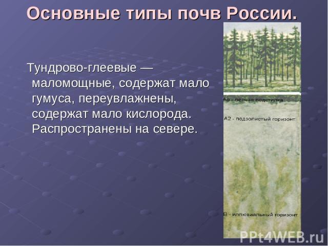 Основные типы почв России. Тундрово-глеевые — маломощные, содержат мало гумуса, переувлажнены, содержат мало кислорода. Распространены на севере.