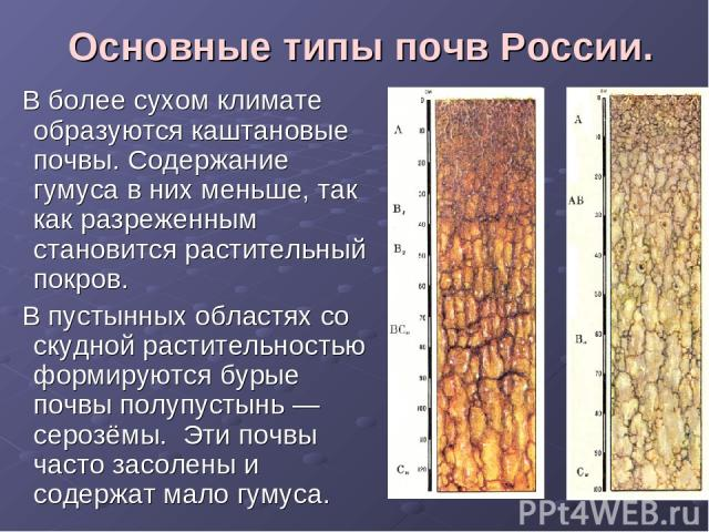Основные типы почв России. В более сухом климате образуются каштановые почвы. Содержание гумуса в них меньше, так как разреженным становится растительный покров. В пустынных областях со скудной растительностью формируются бурые почвы полупустынь — с…