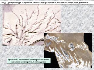 Следы дендритовидных сростков гипса на поверхности напластования осадочного доло