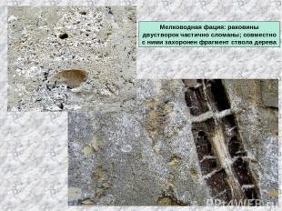 Мелководная фация: раковины двустворок частично сломаны; совместно с ними захоро