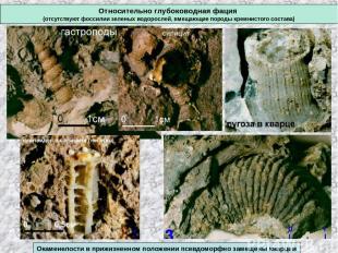 Относительно глубоководная фация (отсутствуют фоссилии зеленых водорослей, вмеща