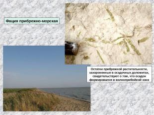 Фация прибрежно-морская Остатки прибрежной растительности, захороненные в осадоч