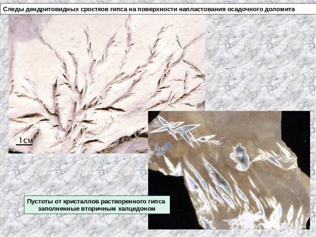 Следы дендритовидных сростков гипса на поверхности напластования осадочного доломита Пустоты от кристаллов растворенного гипса заполненные вторичным халцедоном