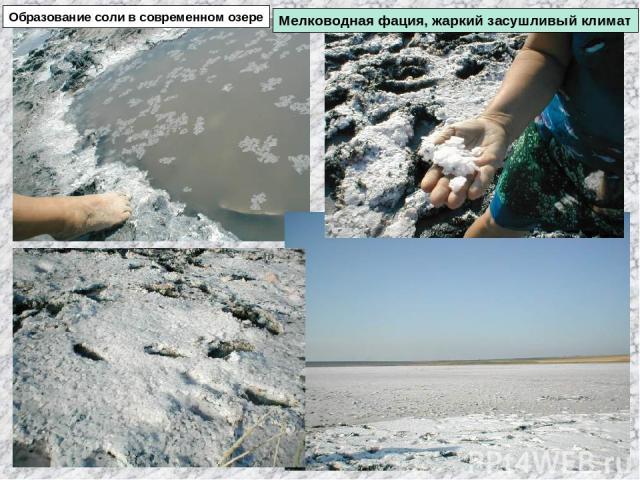 Образование соли в современном озере Мелководная фация, жаркий засушливый климат