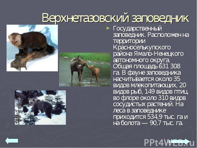 Верхнетазовский заповедник Государственный заповедник. Расположен на территории Красноселькупского района Ямало-Ненецкого автономного округа. Общая площадь 631 308 га. В фауне заповедника насчитывается около 35 видов млекопитающих, 20 видов рыб, 149…