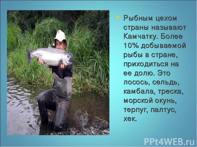 Рыбным цехом страны называют Камчатку. Более 10% добываемой рыбы в стране, приходиться на ее долю. Это лосось, сельдь, камбала, треска, морской окунь, терпуг, палтус, хек.