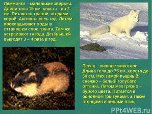 Лемминги - маленькие зверьки. Длина тела 15 см, хвоста - до 2 см. Питаются траво