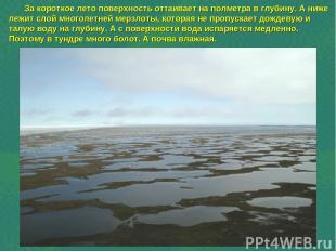 За короткое лето поверхность оттаивает на полметра в глубину. А ниже лежит слой