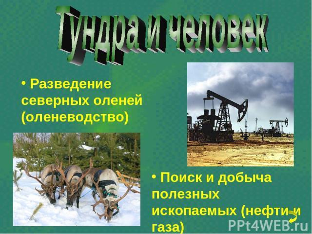 Разведение северных оленей (оленеводство) Поиск и добыча полезных ископаемых (нефти и газа)