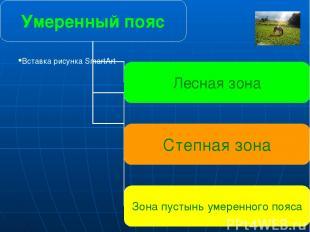 Умеренный пояс Лесная зона Степная зона Зона пустынь умеренного пояса Главная ос