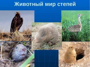 Животный мир степей Степной орел 2.Дрофа 3.Цокор 4.Крот 5.Суслик Раньше в степях