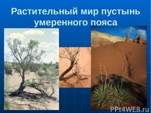 Растительный мир пустынь умеренного пояса 1.Саксаул 2.Верблюжья колючка 3.Суккул
