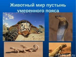 Животный мир пустынь умеренного пояса 1.Черепаха 2.Кобра 3,4. Ушастые круглоголо